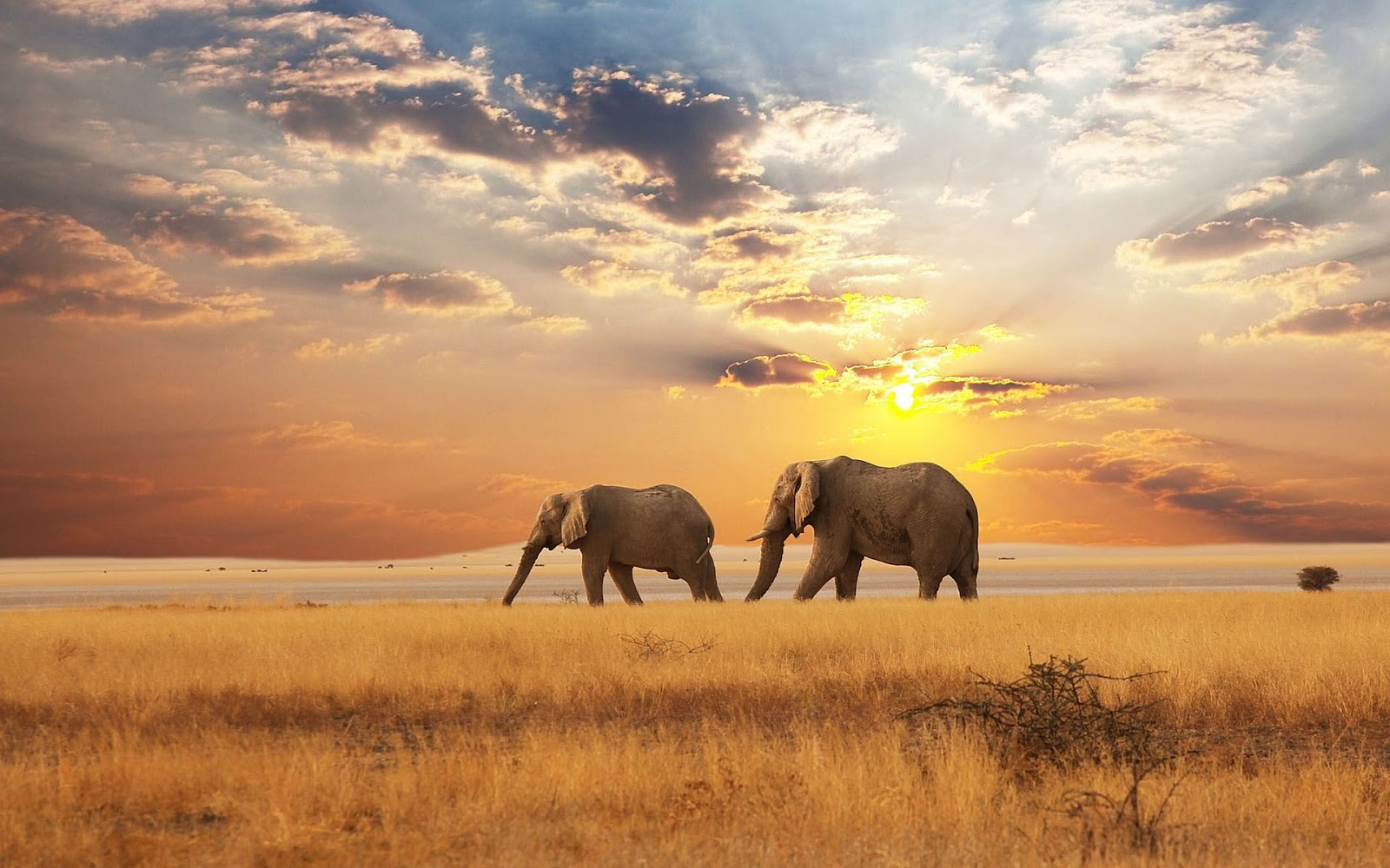 Beautiful Landscapes with Animals