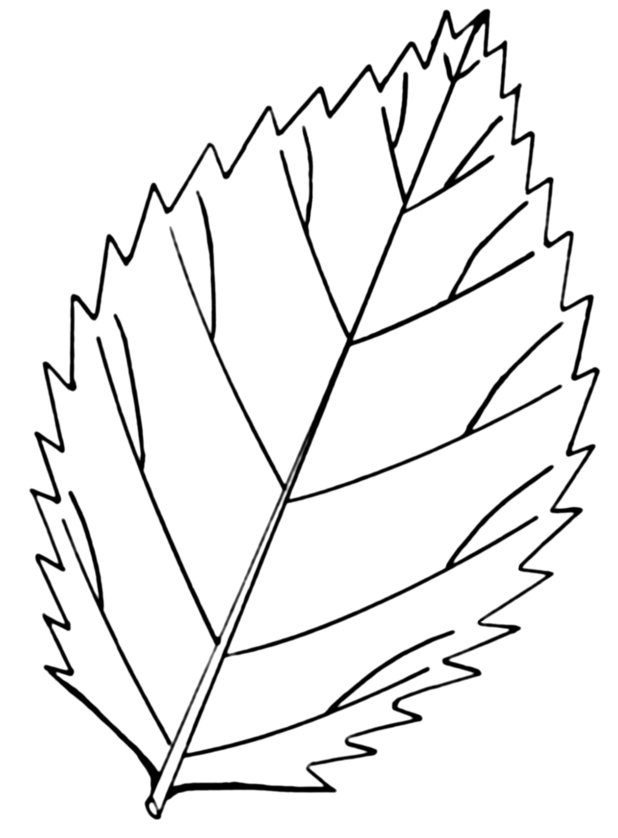 12 Vector Leaf Coloring Pages Adult Images