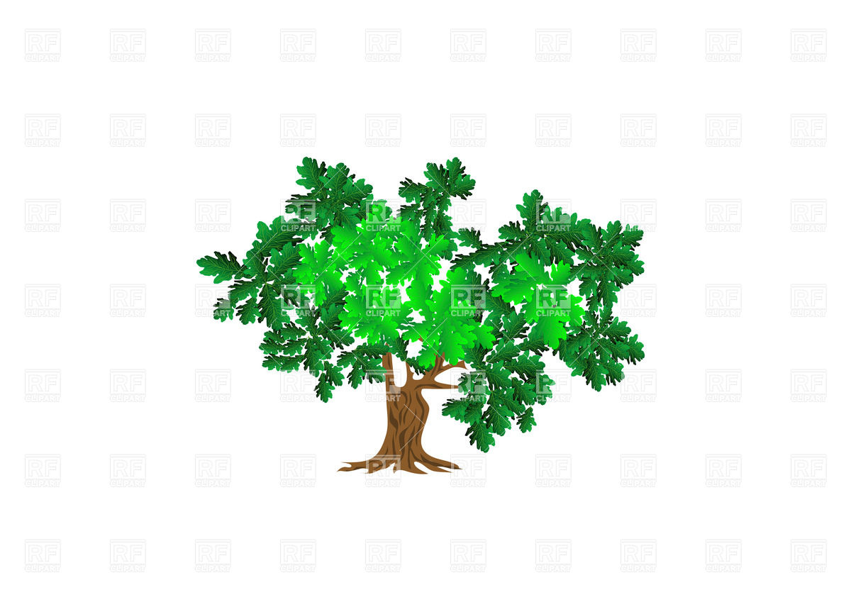 Oak Tree Vector Art