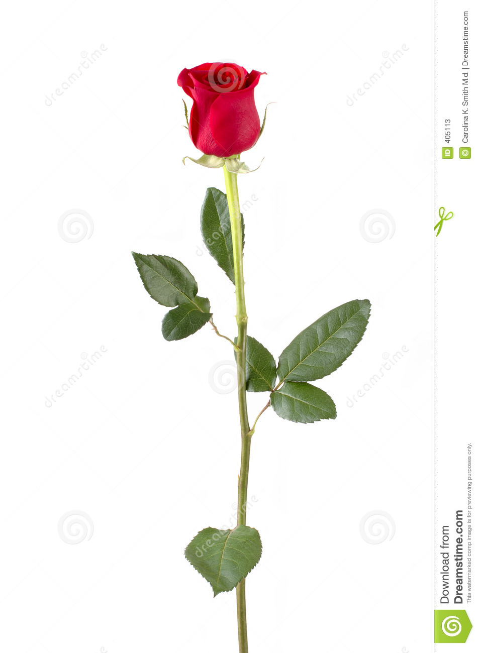 13 Long Stemmed Rose Vector Art Images