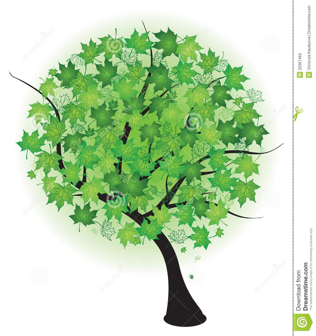 Summer Green Maple Tree