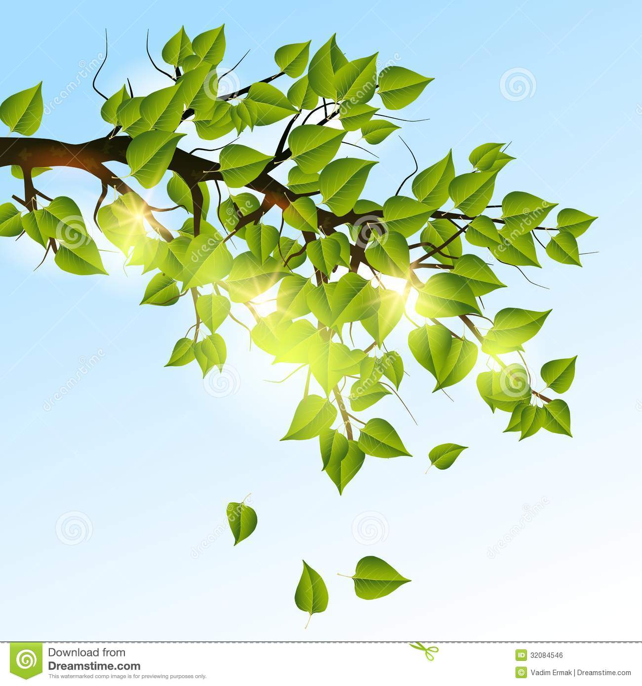 Summer Tree Branches