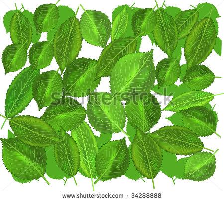 Weeping Willow Tree Vector