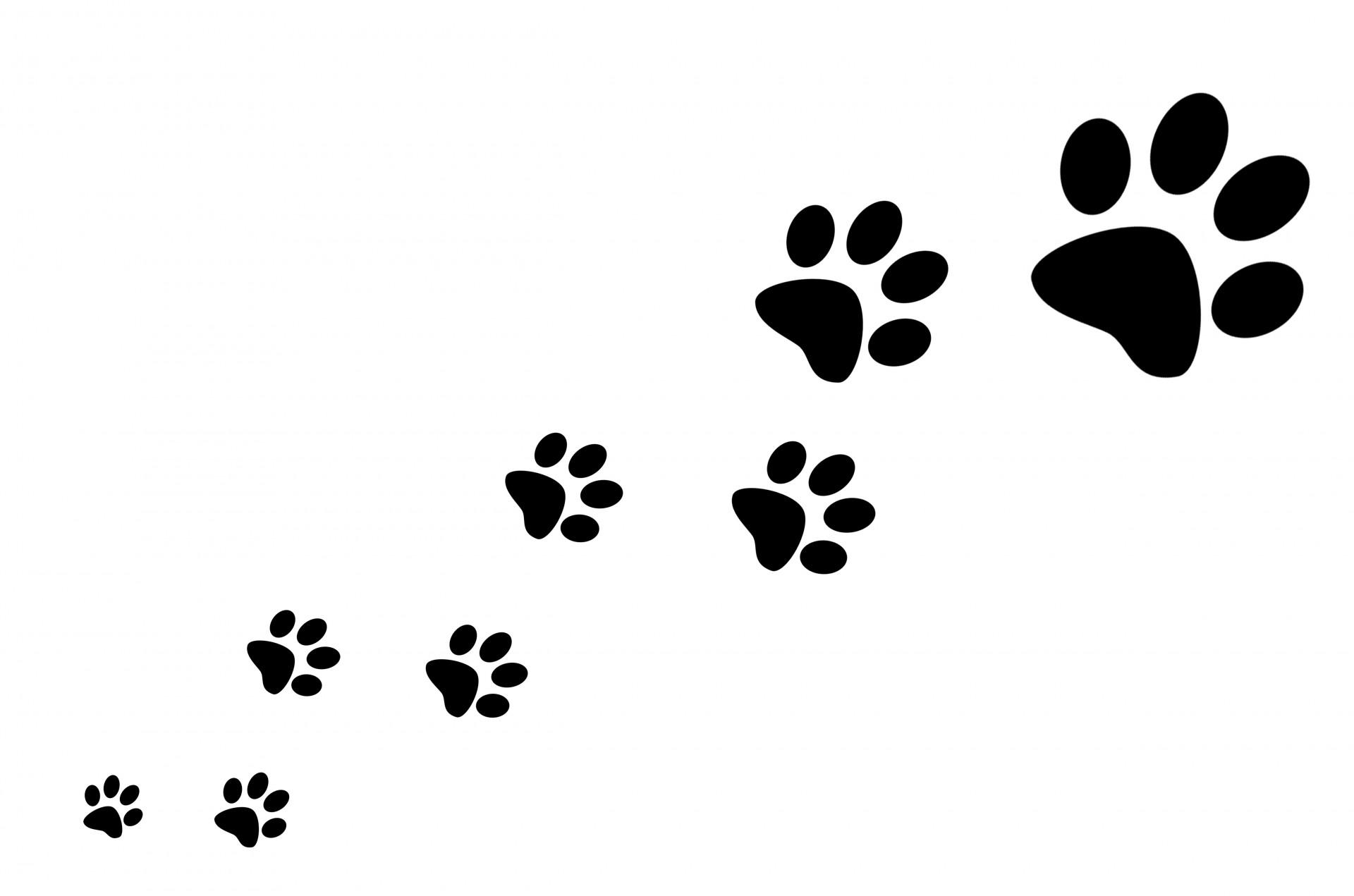 Dog Paw Print No Background