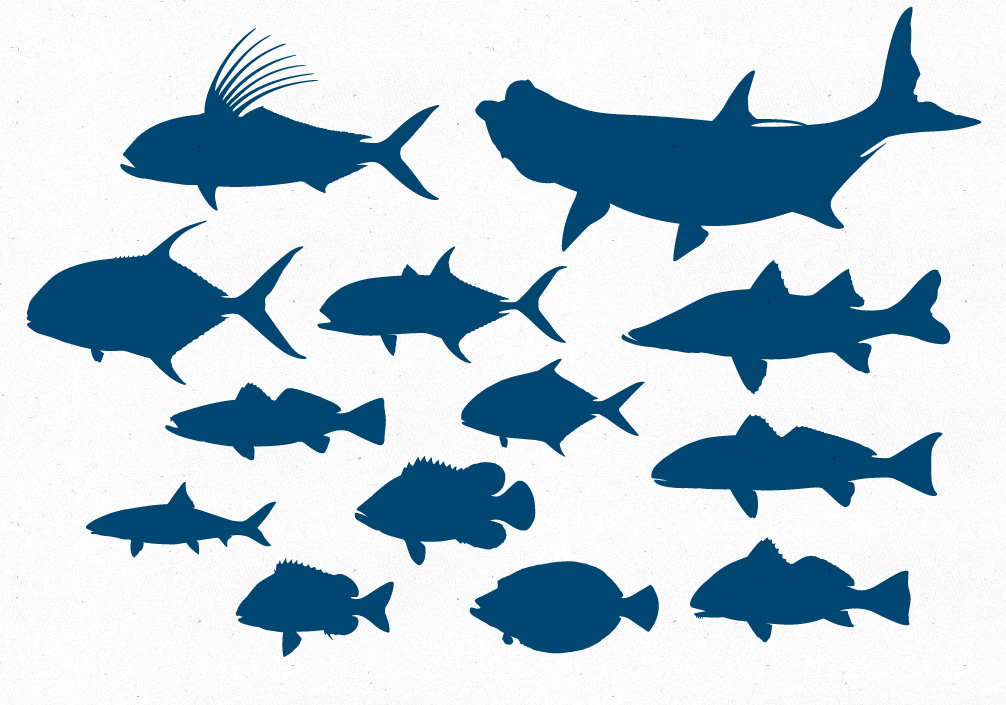 12 Fish Shape Vector Images