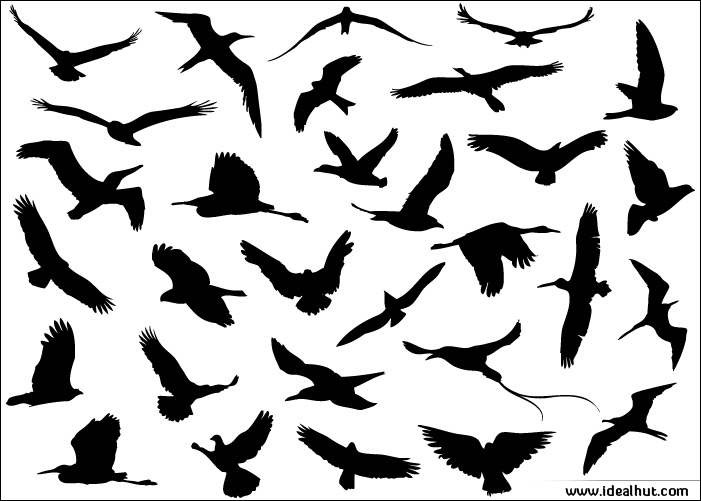 18 Vector Flying Birds Design Images