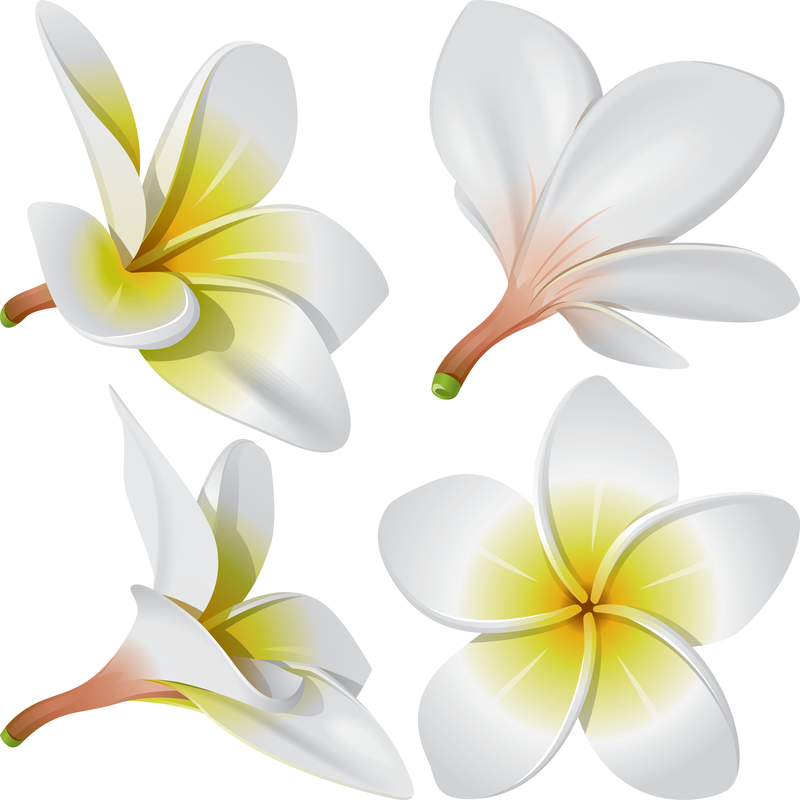 Hawaiian Flower Illustration