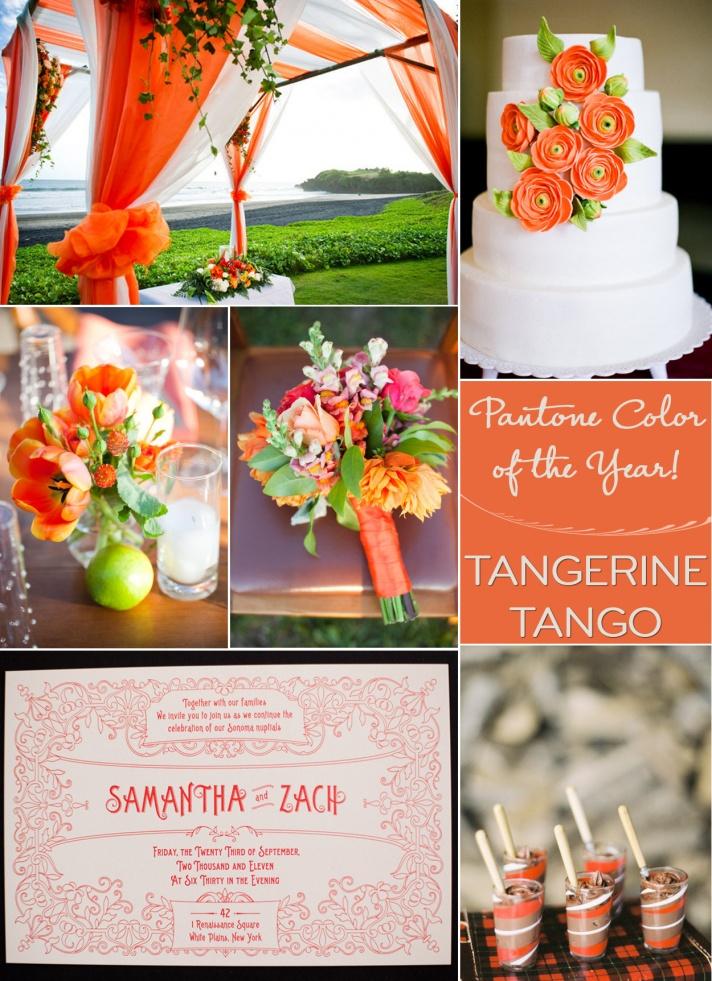 8 Tangerine Designs Pinterest Images
