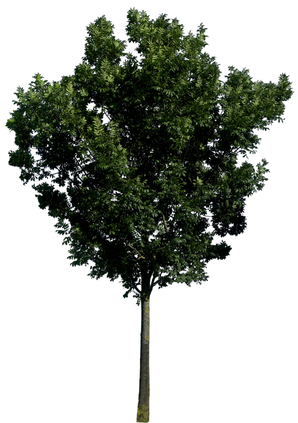 9 Tree Branches PNG Photoshop Images