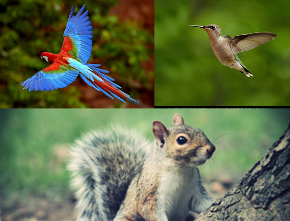 Photoshop Hybrid Animal Tutorial