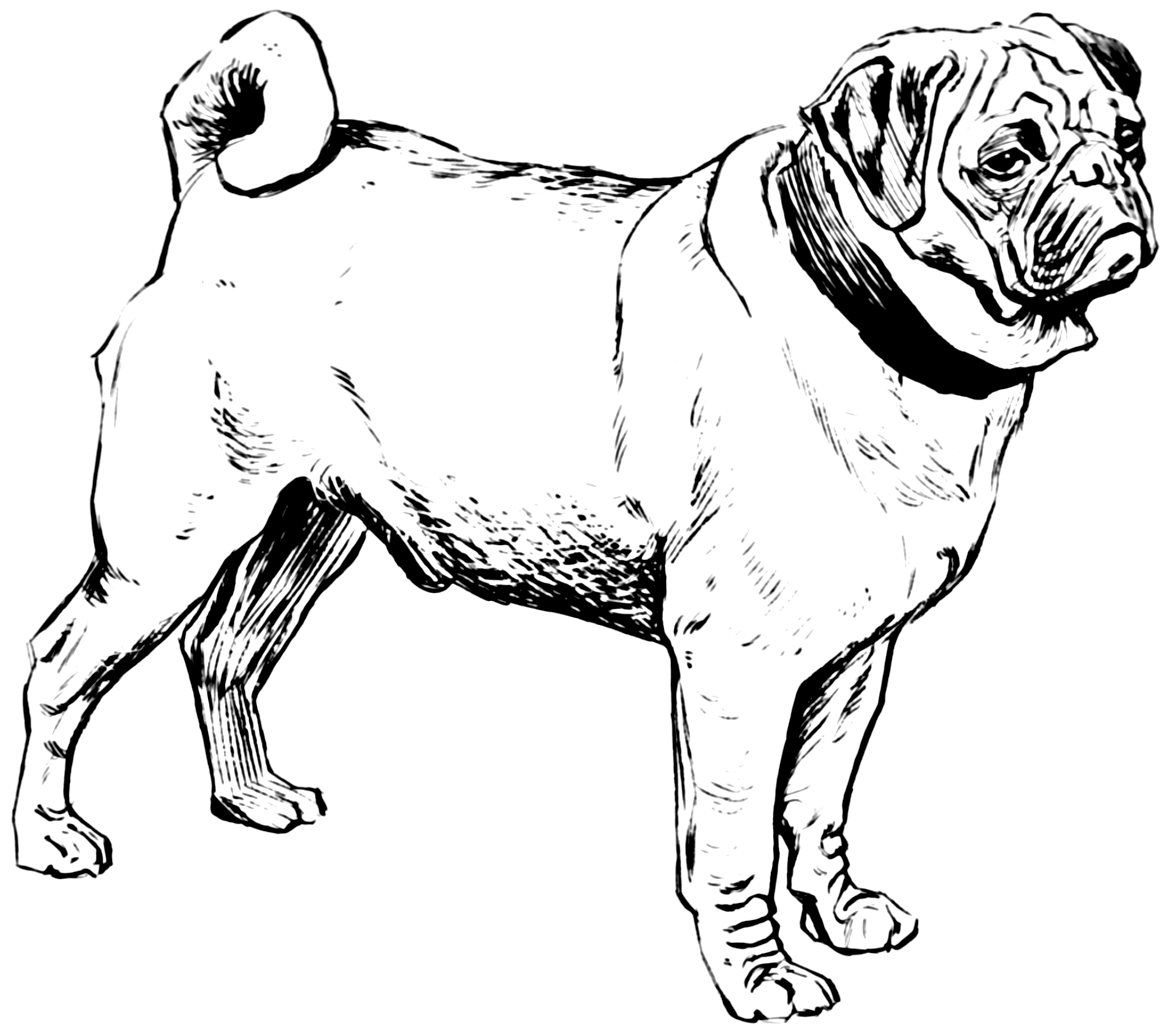 14 Files Icon Free Png Of Pugs Images