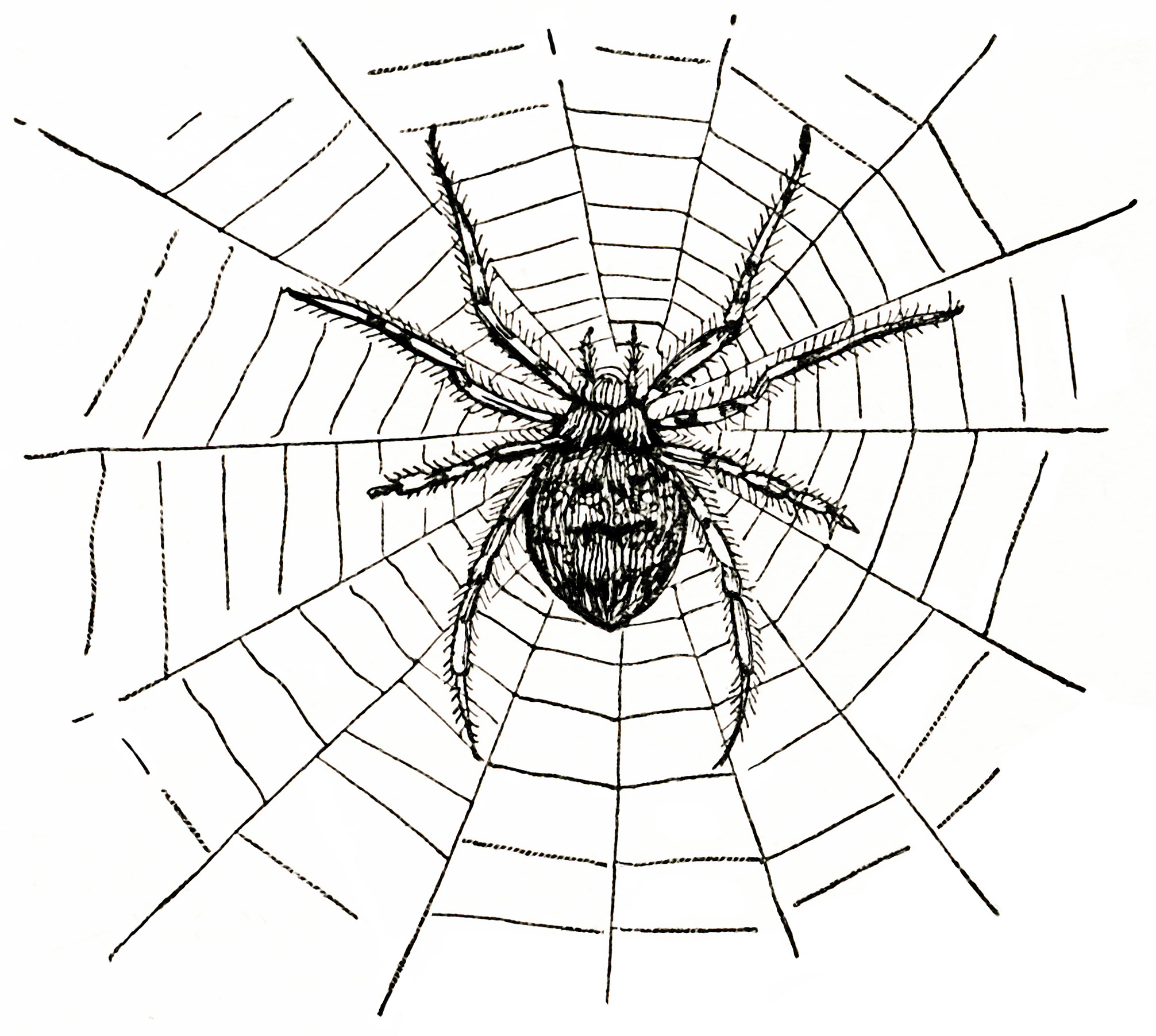 13 Spider Web Graphics Images