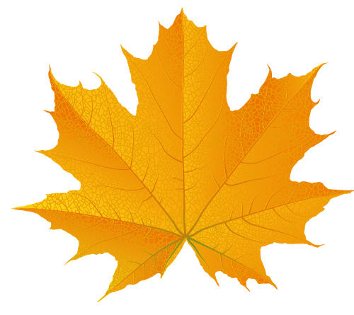 16 Fall Leaves Vector Images