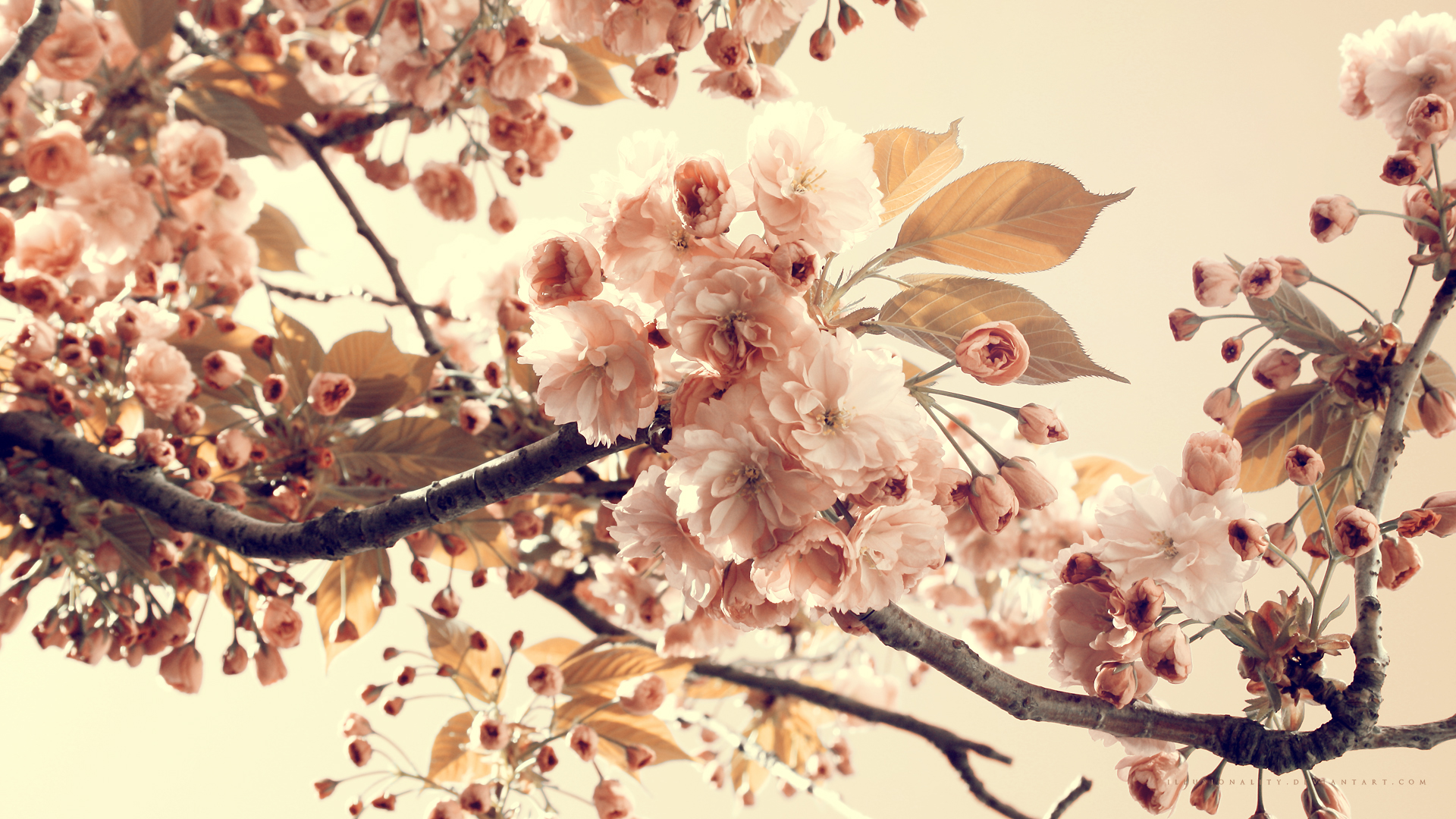 Vintage Flowers Photography