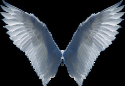 angel wings psd - photo #9