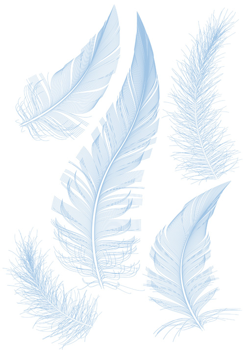 Feather Vector Designs
