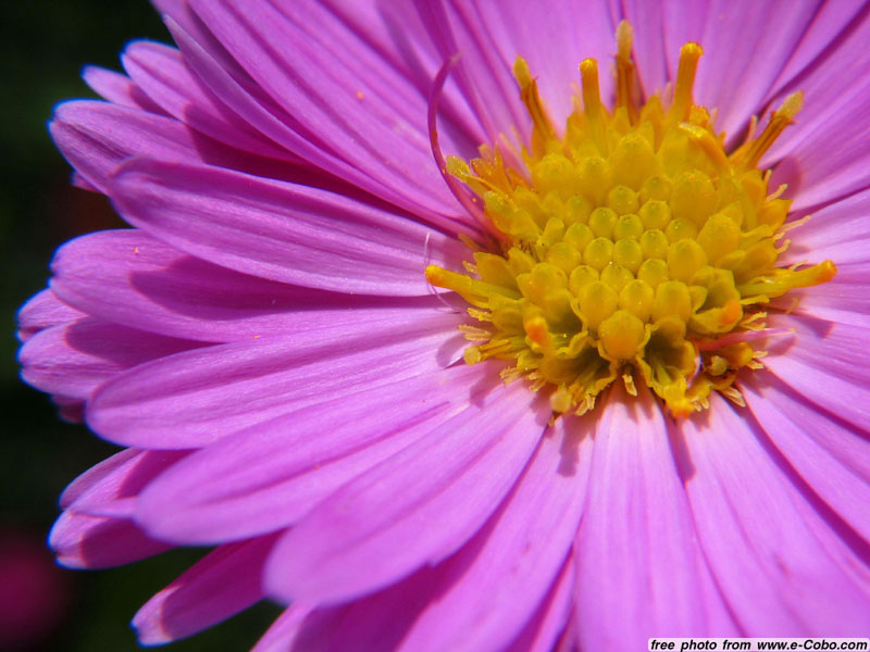 Free High Resolution Stock Flower