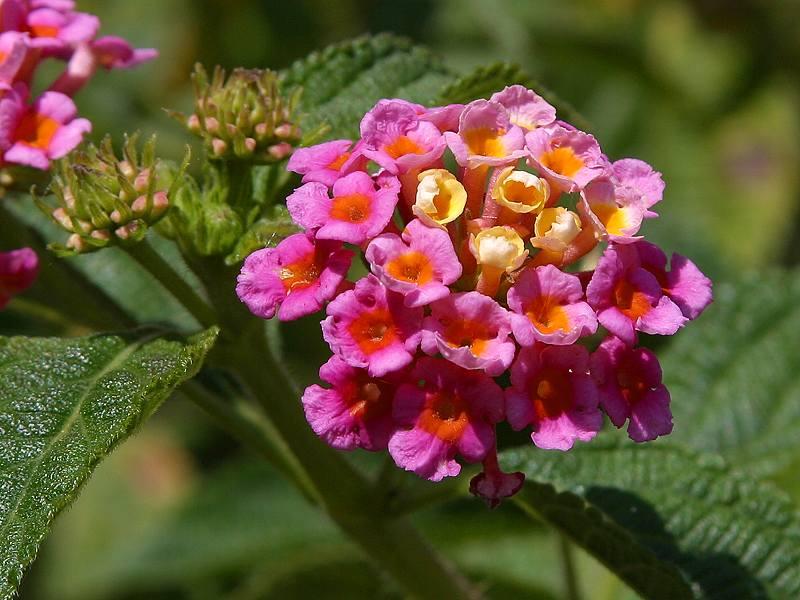 Purple Flower Screensavers