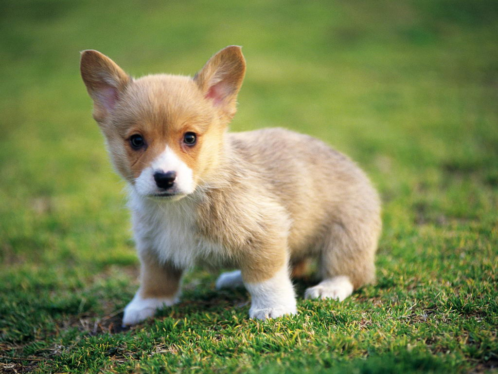 Really Cute Puppy