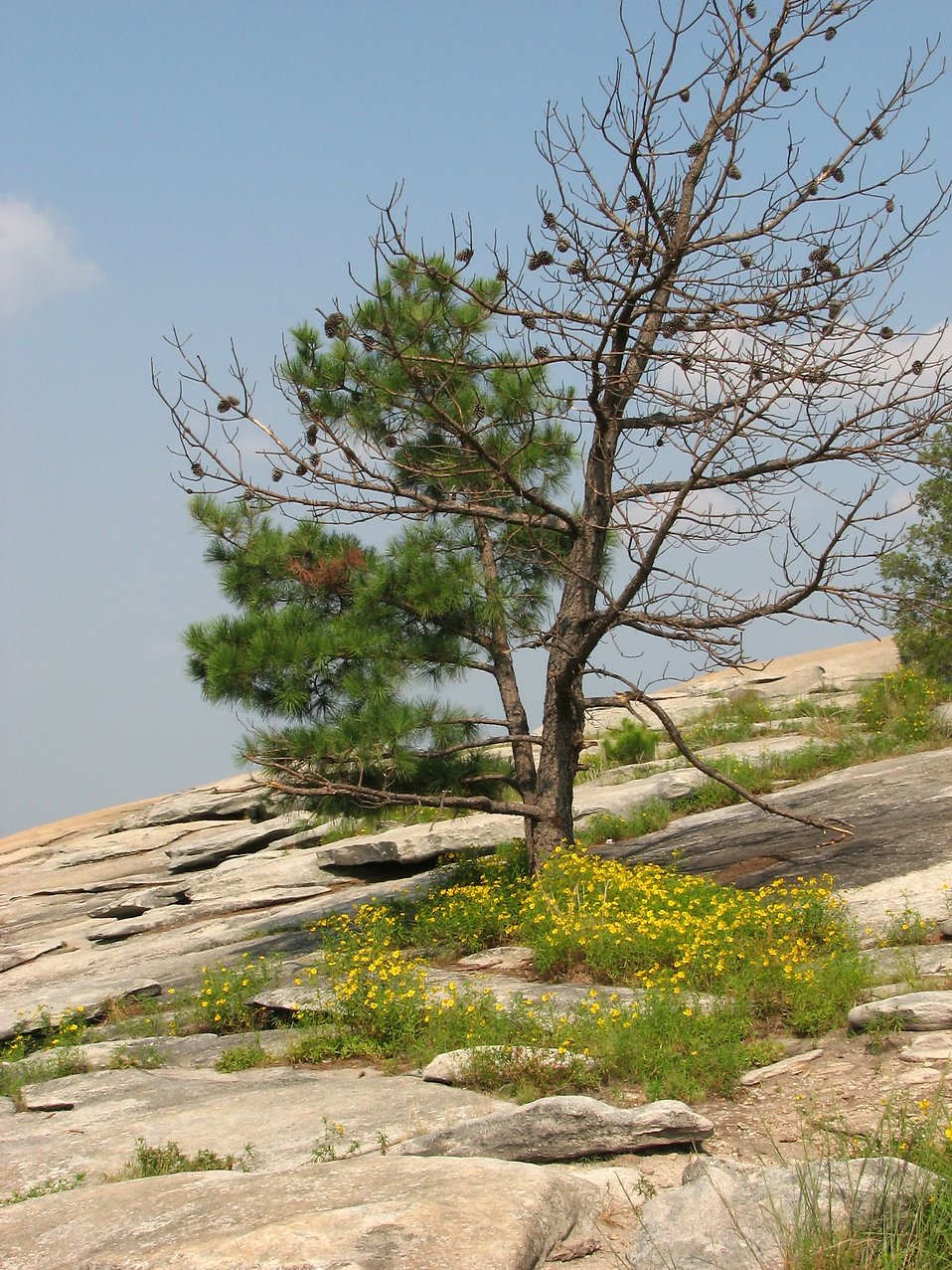 Stone Mountain On Top of the Trees