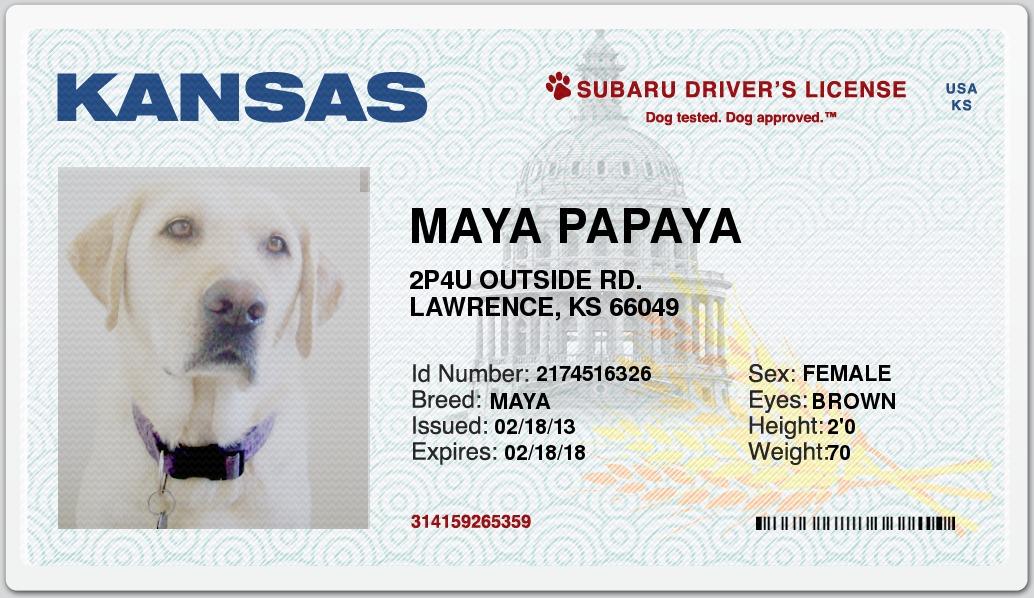 Subaru Dog Drivers License