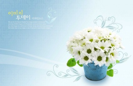 White Flowers Desktop Background