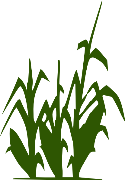 16 Corn Stalk Vector Art Images