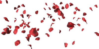 10 Falling Rose Petal PSD Images