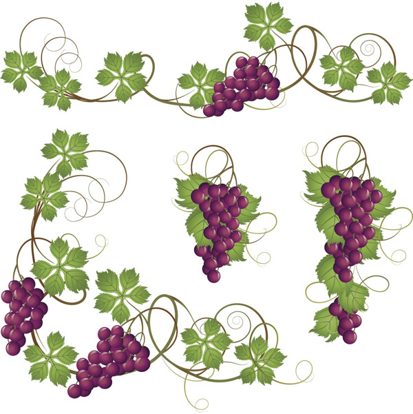 12 Grape Leaf Vector Images
