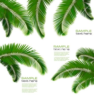 9 Vector Palm Leaves Images