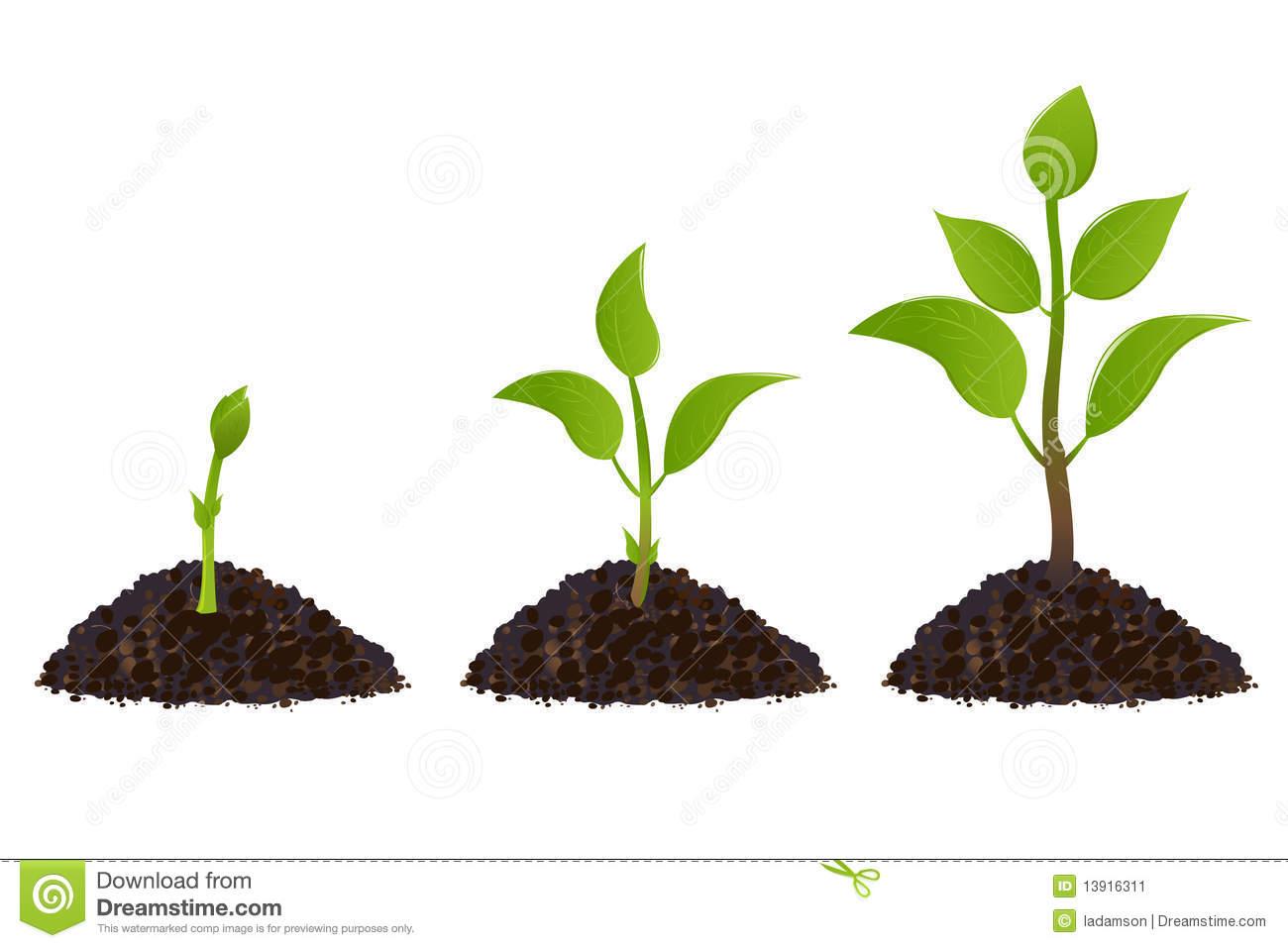 Plant Life Processes