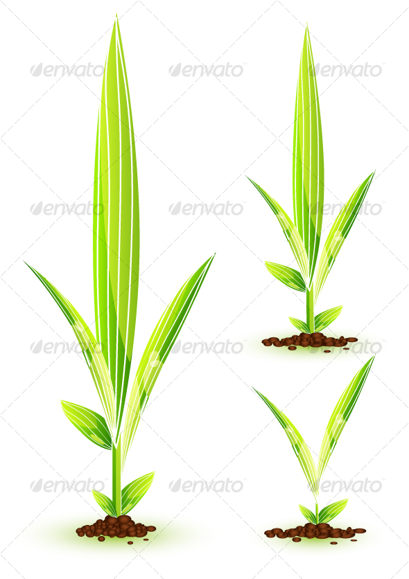 13 Young Plant Vector Images