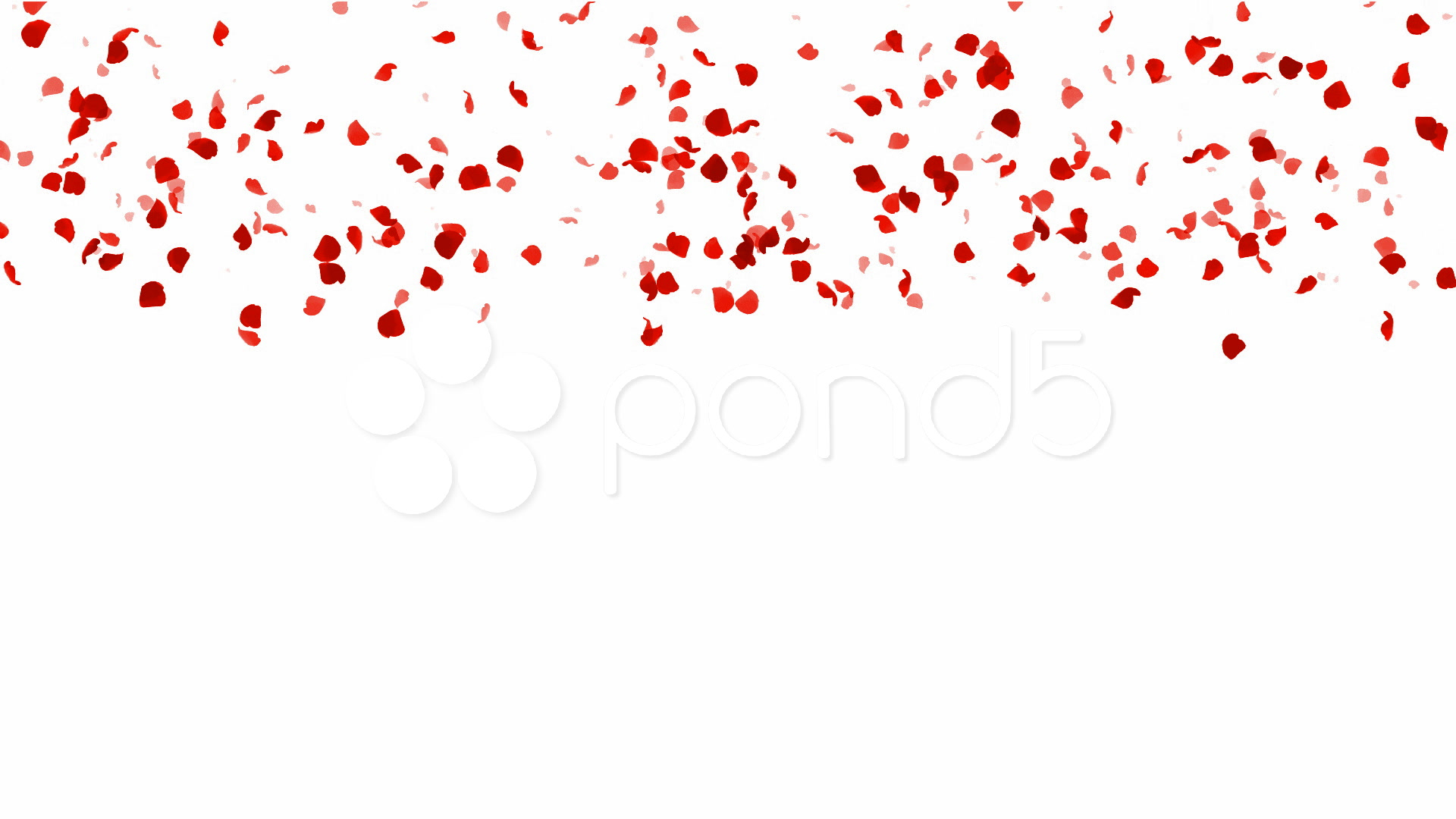 Rose with Petals Falling