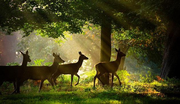 Beautiful Nature Wildlife Photography
