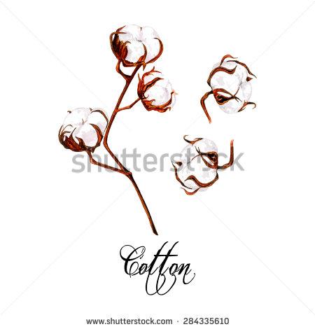 Cotton Boll Vector Art