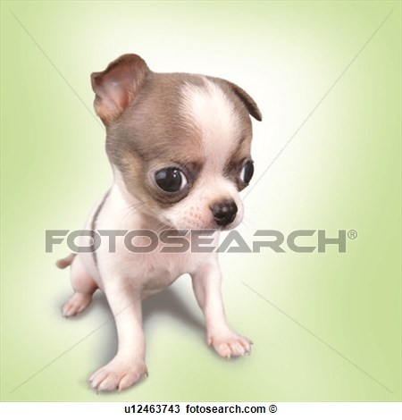 Free Clip Art Chihuahua Dogs