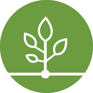 Growth Business Development Icon