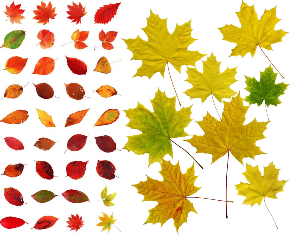 12 Fall Leaves PSD Images