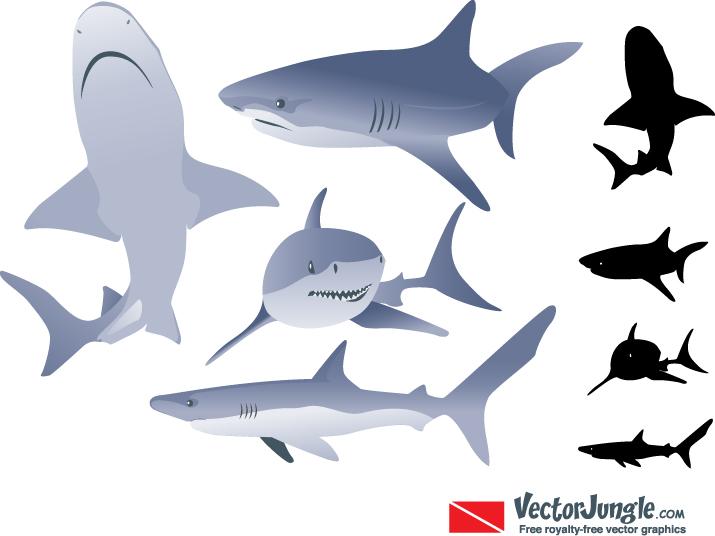Free Shark Vector Art