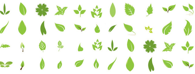 Free Vector Leaves