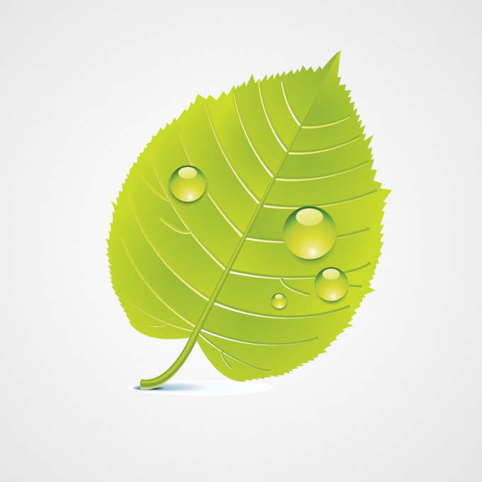 Green Leaf Free Vector Icons