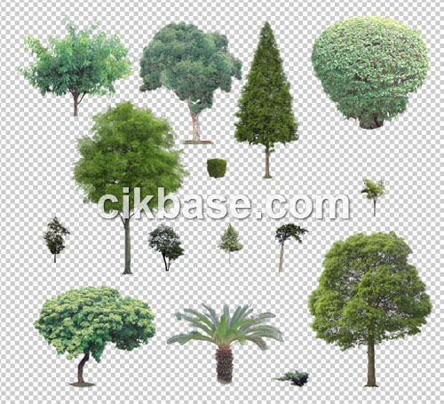 Photoshop Transparent Trees