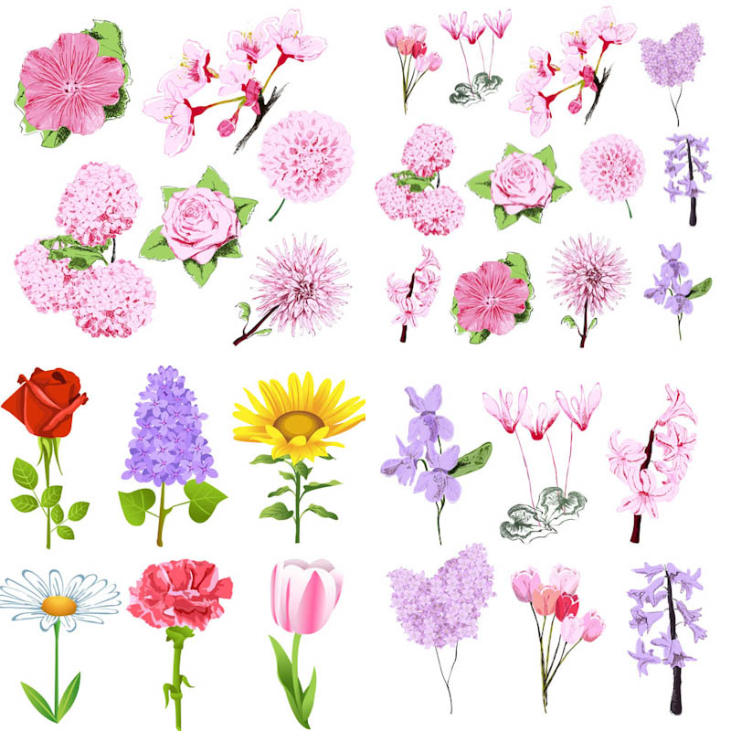 14 Spring Flower Vector Graphics Images