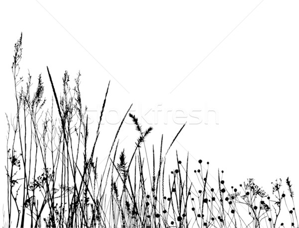 tall grass silhouette. Tall Grass Silhouette Vector H