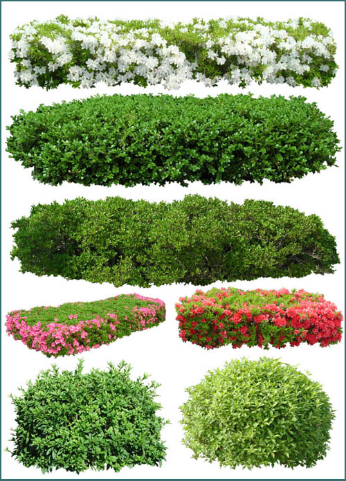 9 PSD Plant Bushes Images