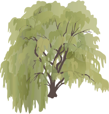 11 Weeping Willow Tree Vector Images