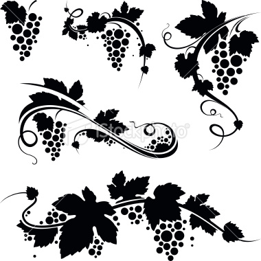 10 Grape Vine Vector Images