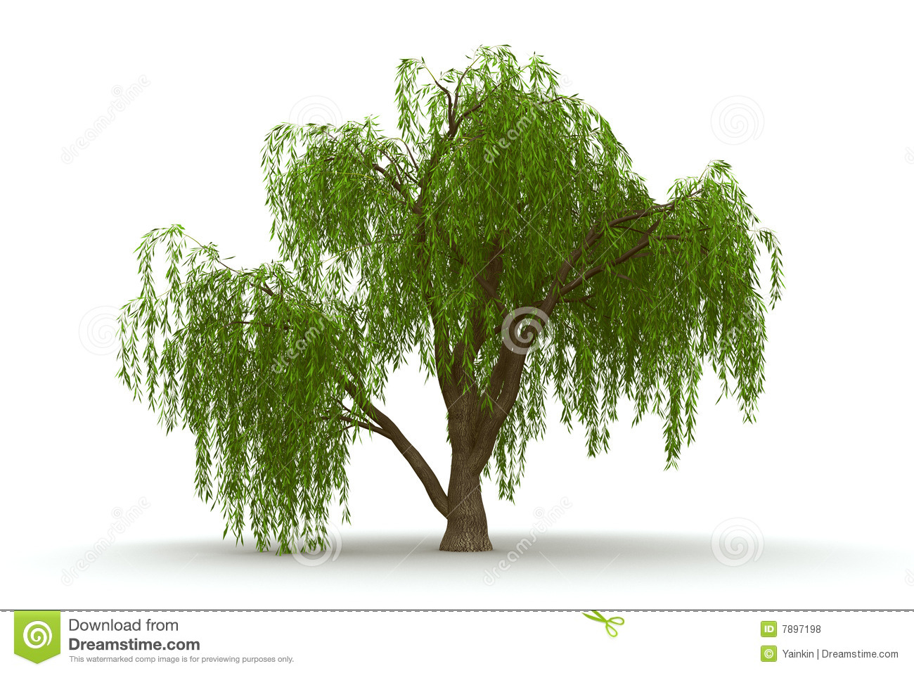 Clip Art Weeping Willow Trees