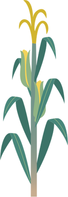 Free Vector Corn Stalks