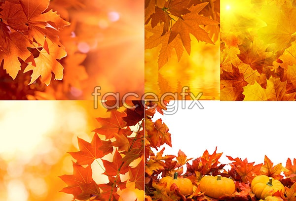 15 PSD Autumn Leaves Images